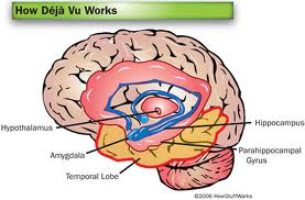 Brain diagram of Deja Vu